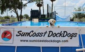 SunCoast DockDogs