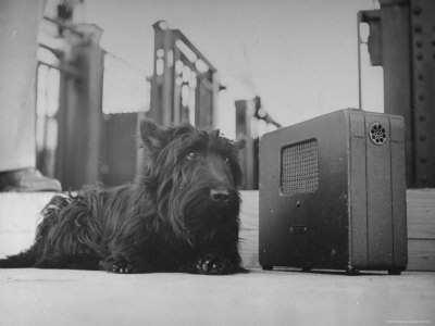 Dog listening to Radio DockDogs