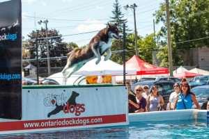 Ontario DockDogs