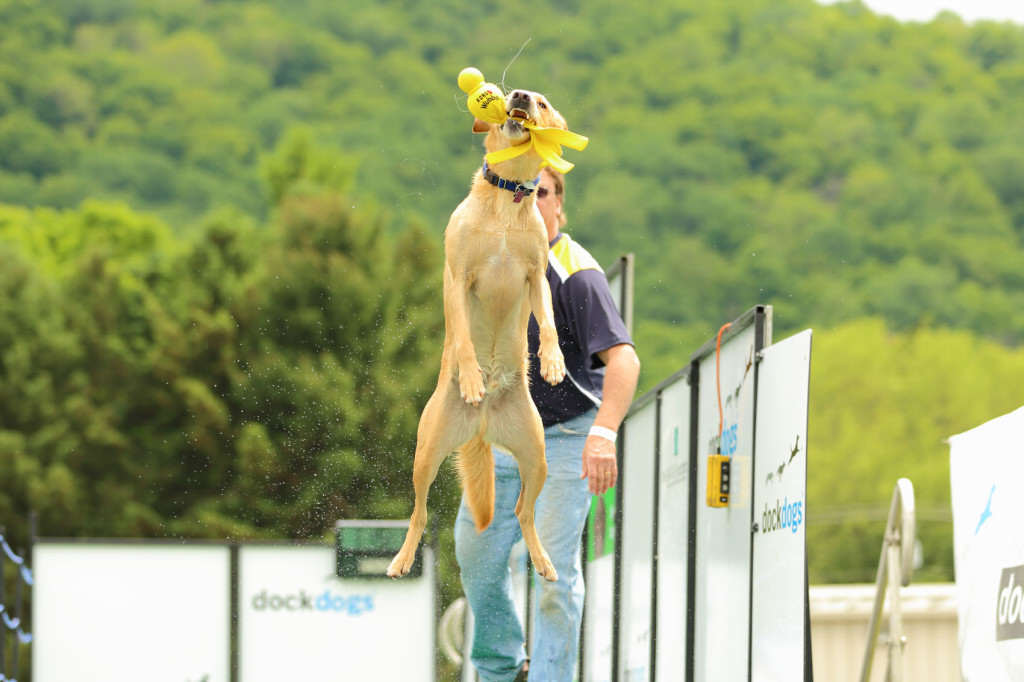 DockDogs Big Air