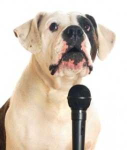 Microphone dog dockdogs