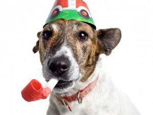 Celebration Dog