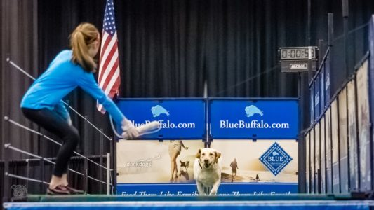 Precise Video Productions Blue Buffalo DockDogs
