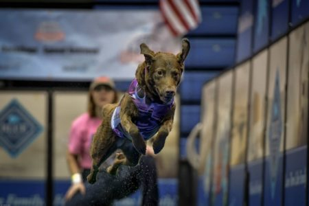 DockDogs World Championships by Mike Salem
